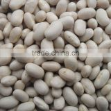 Japanese white kindey bean