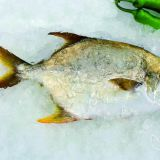 Frozen Golden Pompano