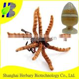 Natural herbal medicine extract Cordyceps Sinensis Extract--Cdycepin 80%-90%
