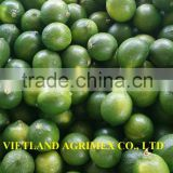 FRESH-GREEN LEMON-LIME FOR SALE FROM VIETNAM IN NEW SEASON 2016 WITH COMPETITIVE PRICE