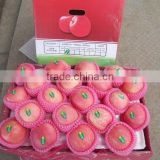2014 Crop Chinese red fuji apple