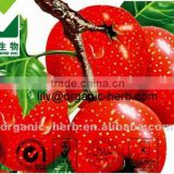 Hawthorn Berry plants extract