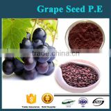 Grape seed extract organic Powder 95% HPLC
