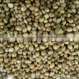 Hemp Seeds For Sale, Birds Feeding Type