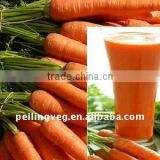 CHINESE NEW FRESH BABY CARROT