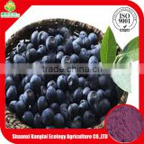 Acai Berry Juice Powder Supplier Provided High Quality and Competitive Price Product