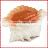 2013 brand new exotic white conch shells for sale
