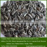 2015 New Crop 5009 Raw Sunflower Seeds For Snack