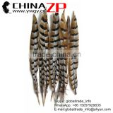 ZPDECOR Wholesale Top Selling Raw 45-50cm Size Reeves Venery Pheasant Tail Feathers for Decorations