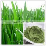 organic water soluble barley grass powder with free sample
