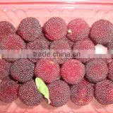 Fresh red bayberry for sale