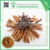 2015 TOP quality Cordyceps sinensis extracts powder Polysaccharide 10% FREE sample