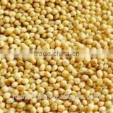 White Millet for birdseed,export to europe,USA
