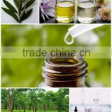 Tea Tree Oil (Melaleuca alternifolia) Australian Essential Oil - Organic, Pharmaceutical Grade - Highest quality Australia