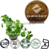 GMP standard factory supply Plant extract Ivy Extract powder,Natural Ivy Extract,Ivy leaves extract