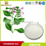 GMP quality yohimbe hcl powder with yohimbe bark extract powder