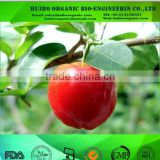 organic Acerola cherry powder / acerola powder