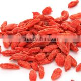 Dried Goji Berry, Frozen IQF Goji Berry