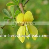 INquiry about High Quality Butcher broom Extract