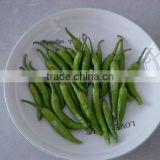 Sell Green Chilli Pepper