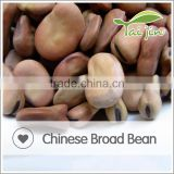 Export China bulk field bean