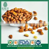 Provider Convenience Food Sweets Siberian Open Pine Nuts in Shell