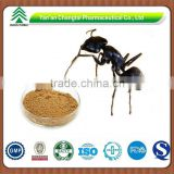 Chinese Black Ants Powder