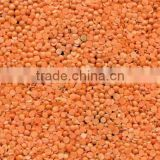 Red split and whole lentils sortexed quality
