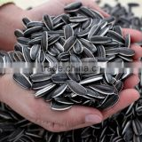 2014 New Crop Chinese sunflower seeds