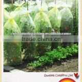 PE Agricultural Tomato tube Green house with holes