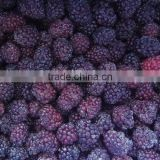 IQF Fruit Frozen Blackberry Grade A