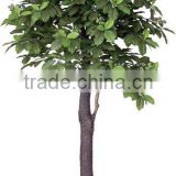Decorative Artificial chinese chestnut tree