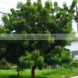 neem oil manufacturer