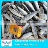 Frozen sardine fish for bait