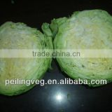 fresh cabbage from China (green & purple)