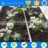 PE material drip irrigation pipe as the agriculture irrigation hose for automatic irrigation system