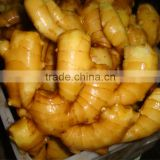 2016 new crop HACCP Chinese organic fresh ginger