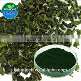 Manufacturer Pure Natural High Quality Chlorophyll Powder, Sodium Copper Chlorophyllin, Super Chlorophyll Powder