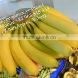 Best Quality Green Cavendish Banana