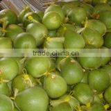 Vietnam Fresh Pomelo competitive price and High Quality