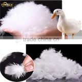 High quality goods 4-6cm washed feathers