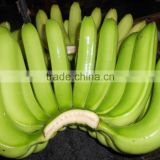 Green Banana for Buyer From All Country