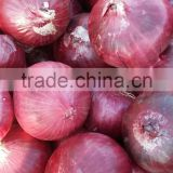 Red Onion Exporters From India