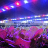 MarsHydro LED Lights Full spectrum LED Grow Light Hydroponics Grow System LED Grow Light Grow Bar Factroy Wholesales