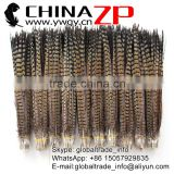 CHINAZP Wholesale High Quality Cheap Natural Raw Ringneck Pheasant Tail Feathers for Carnivals Customs