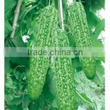 Hybrid bitter melon seeds Bitter gourd seeds for sale-Green beauty