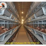 Mexico Poultry Chicken Farming Battery Chicken & Layer Cage & Chicken Coop & Hen Coop & Laying Hen Cage in Chicken House
