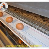 Haiti Poultry Farm Equipment & Chicken Farm Battery Chicken Cage & Layer Cage & Chicken Coop & Hen Coop & Laying Hen Cage in Chicken House