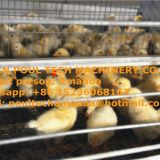 Poultry Farm Equipment - Broiler Cage & Meat Chicken Cage & Chicken Coop in Broiler House & Chicken Shed