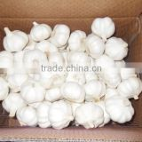 fresh garlic for export Spain,garlic,packing mesh bag garlic,2016 Crop Chinese jinxiang normal white garlic